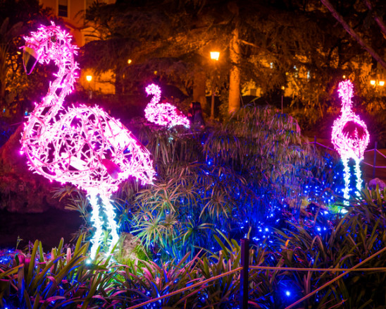 christmas light display at the zoo