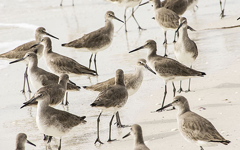 Group of birds standing on the beach