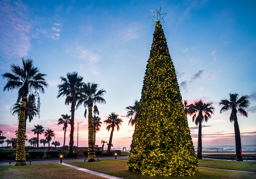 galveston waterfront christmas tree