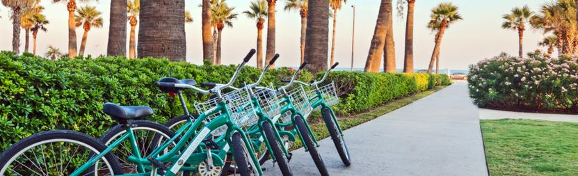 a row of blue bicycles on a long sidewalk lined with bushes and palm trees in the distance