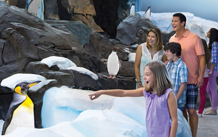 SeaWorld Vacation Package