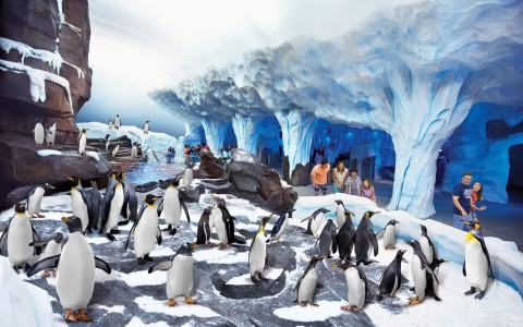 Penguins in exhibit at Seaworld with crowd spectating