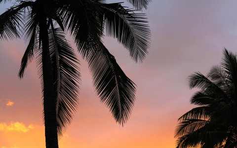 Silhouette of 2 palm trees agains an orange sky