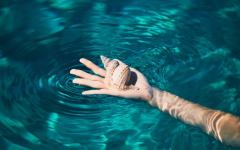 An outstretched arm in the water with the palm of the hand facing up and holding a seashell