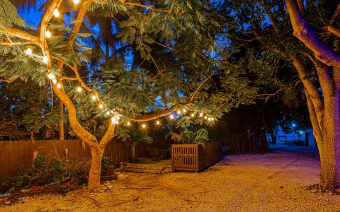 outdoor area with trees and string lights