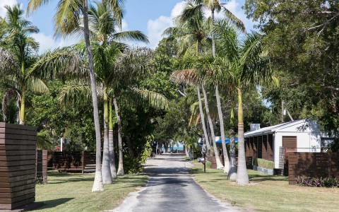 pathway outdoor with palm trees and accommodations