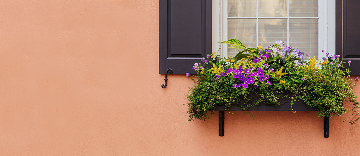 "flowers on windowsill and an orange wall. Image says ""Cherleston's Most Charming Historic Inn"""
