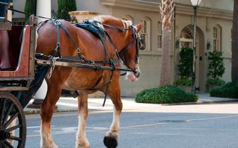 horse pulling a carriage in the street