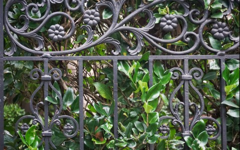 rod iron fence with vines