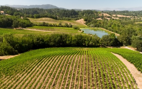 Sonoma Wine Vineyard with lake