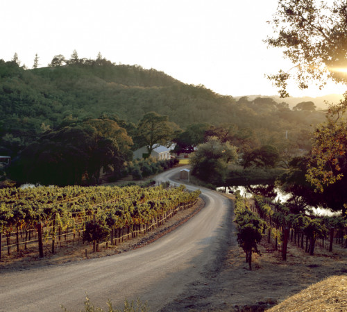 vineyards at sunset with lush green mountain backdrop