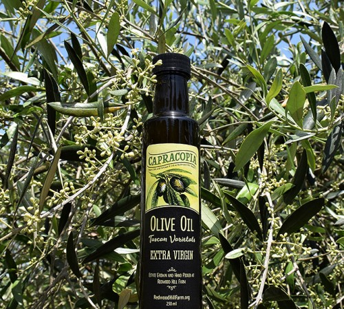 olive oil  button in front of plant-1