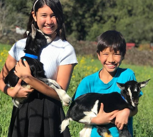 a boy and girl each holding goats-1