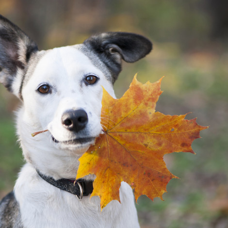 dog holding leaf in his mouth