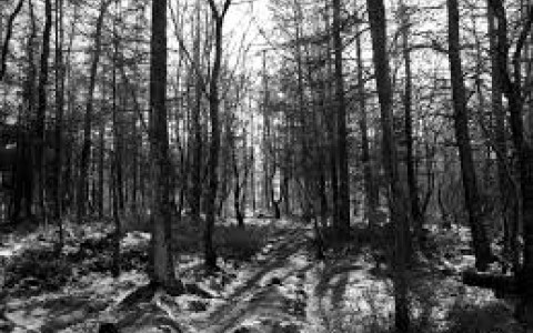 Haunted Forest black and white