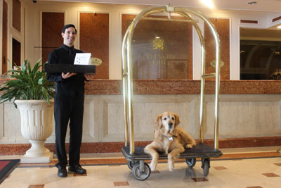 Hotel Bellman standing next to luggage cart with golden retriever laying on it