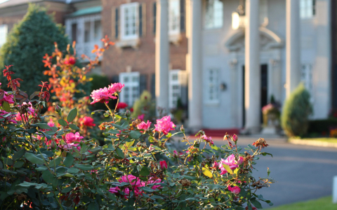 Bush with pink flowers in front of mansion entrance