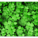 four leaft clovers