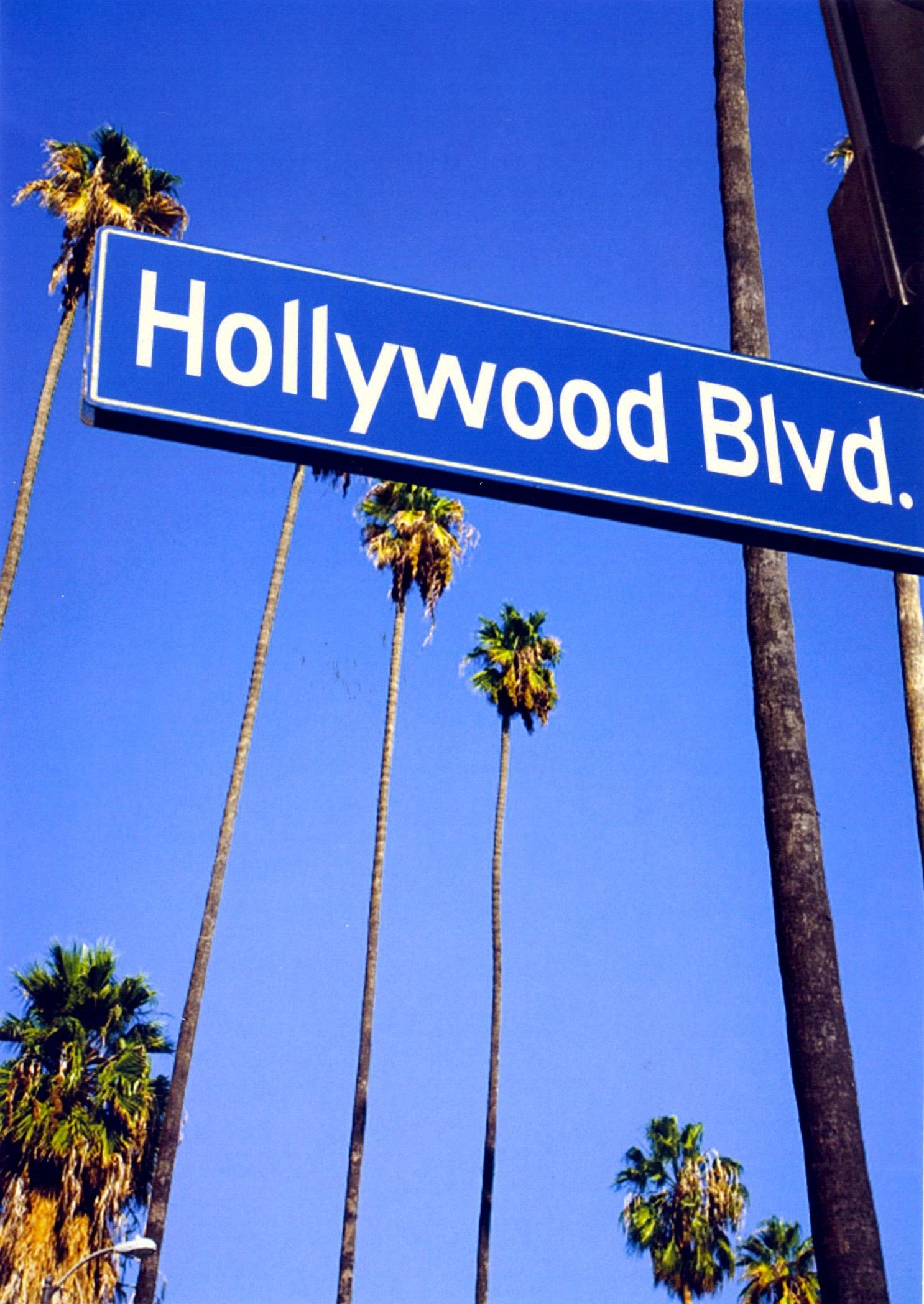 hollywood blvd sign with palm trees