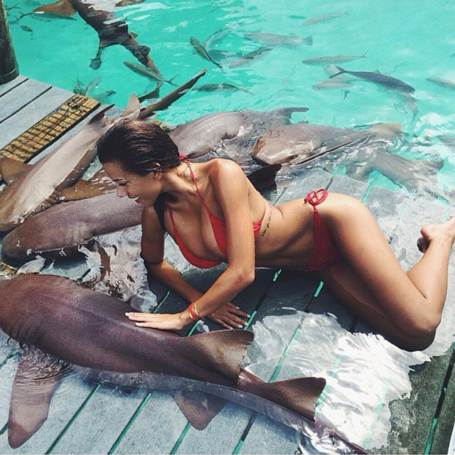 a woman petting a nurse shark in the water