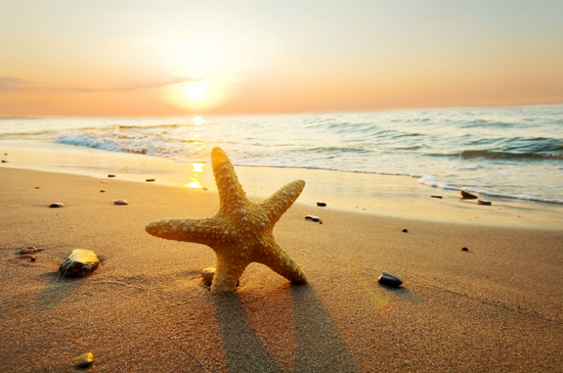 Starfish in the Sunset