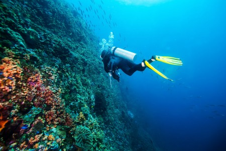 a person scuba diving by a reef