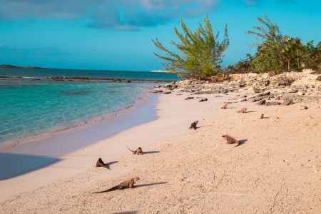 the beach with iguanas in the sand