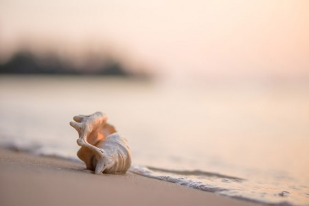 a conch shell on the beach next to the ocean