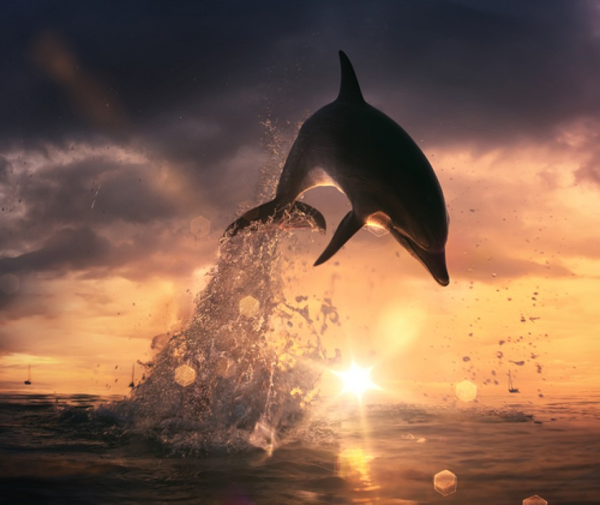 dolphin jumping out of the water at sunset