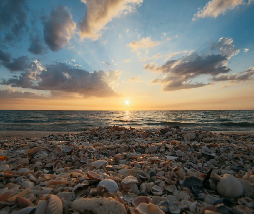 a beach sunset over seashells