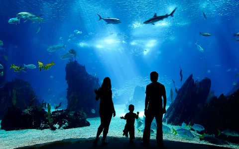 family looking into an aquarium tank