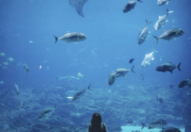 0917 Woman standing in front of massive tank of sharks and fish 59adc51fdcf05