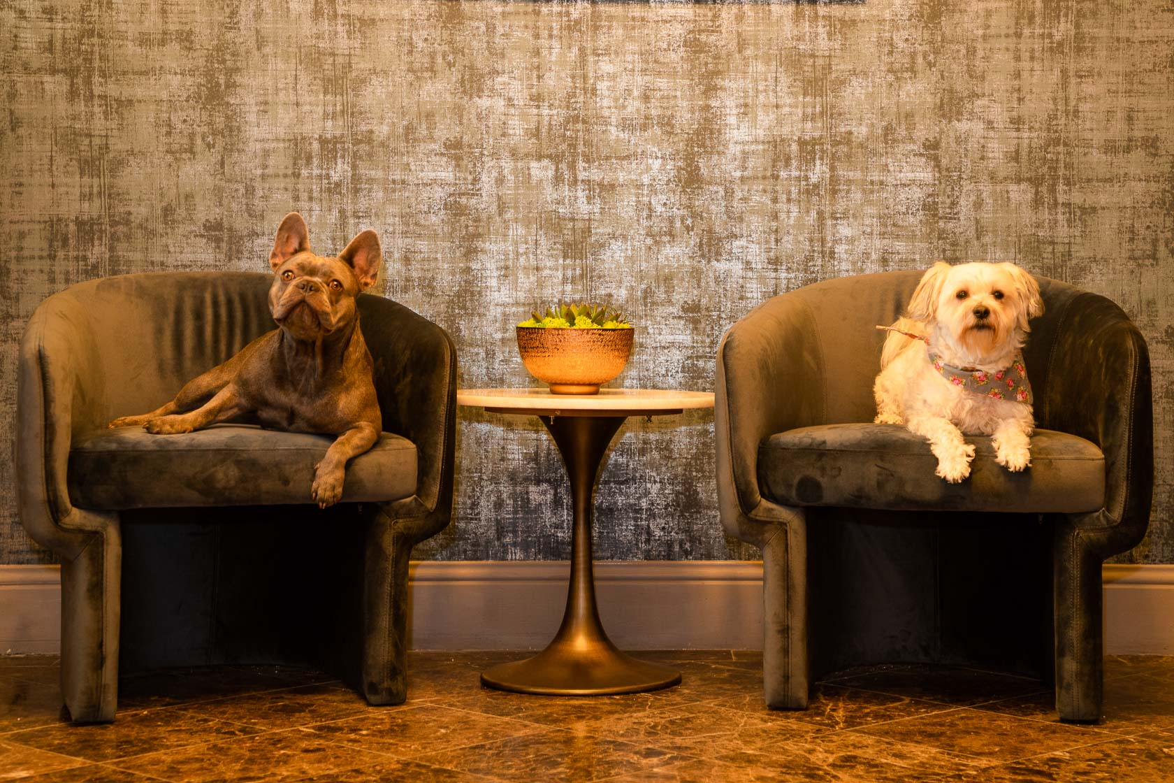 two dogs sitting on grey armchairs