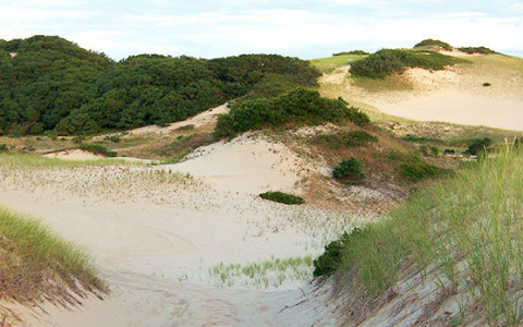 sand dunes in provincetown