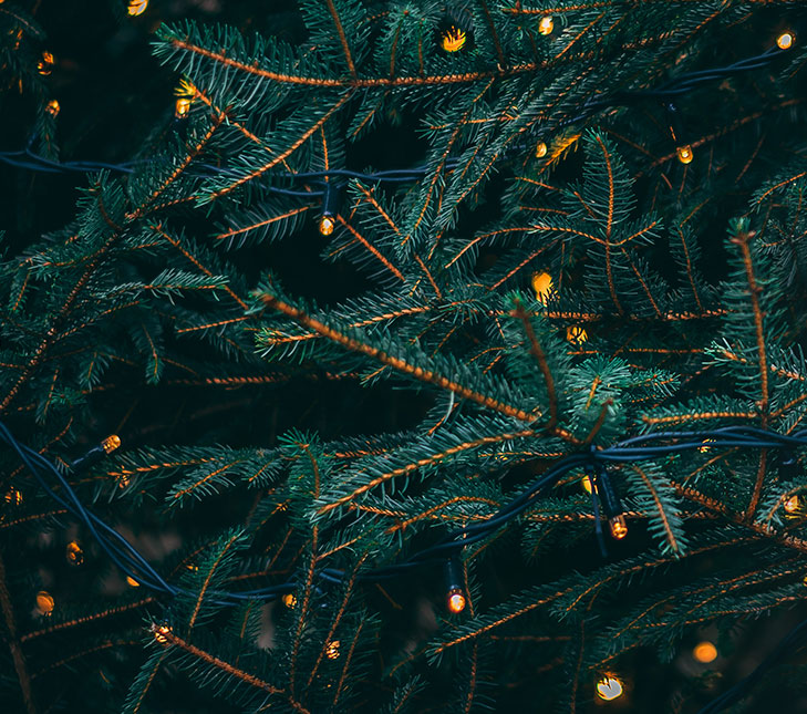 Close up of a Christmas tree strung with lights