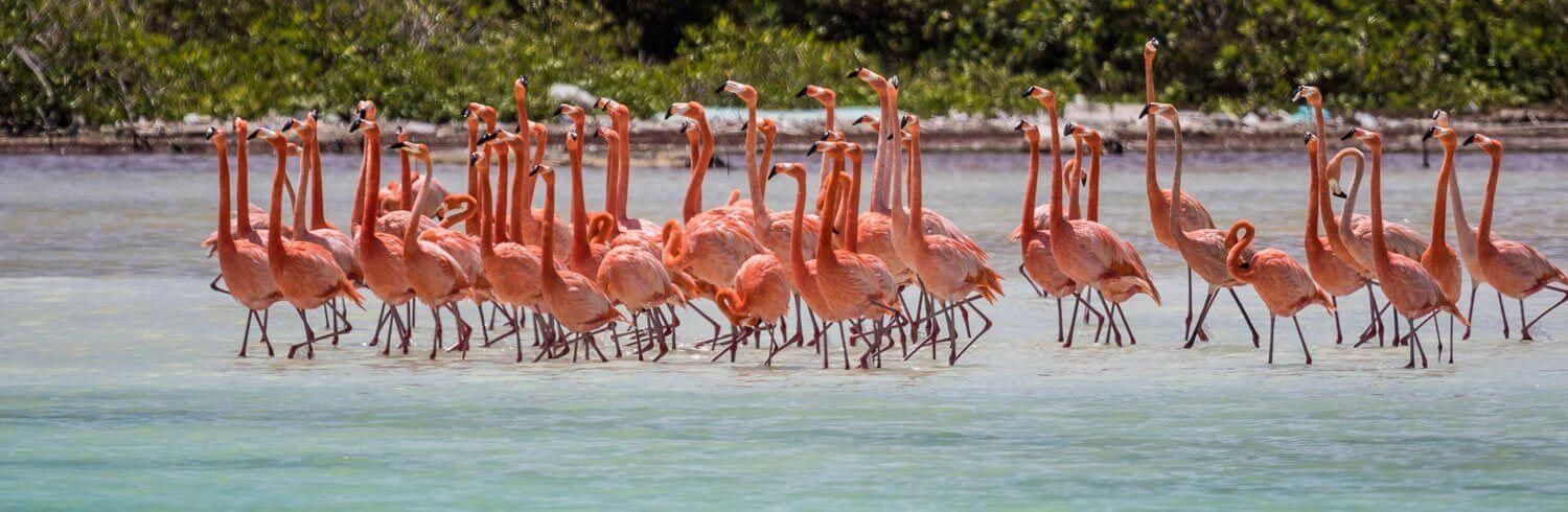 a flock of flamingos in shallow water