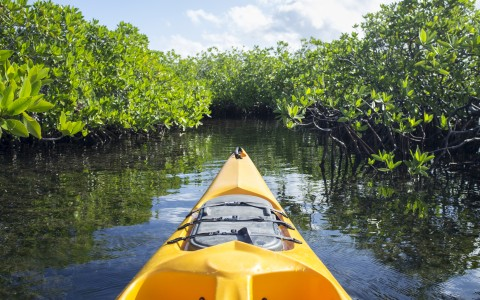 yellow kayak going into mangroves