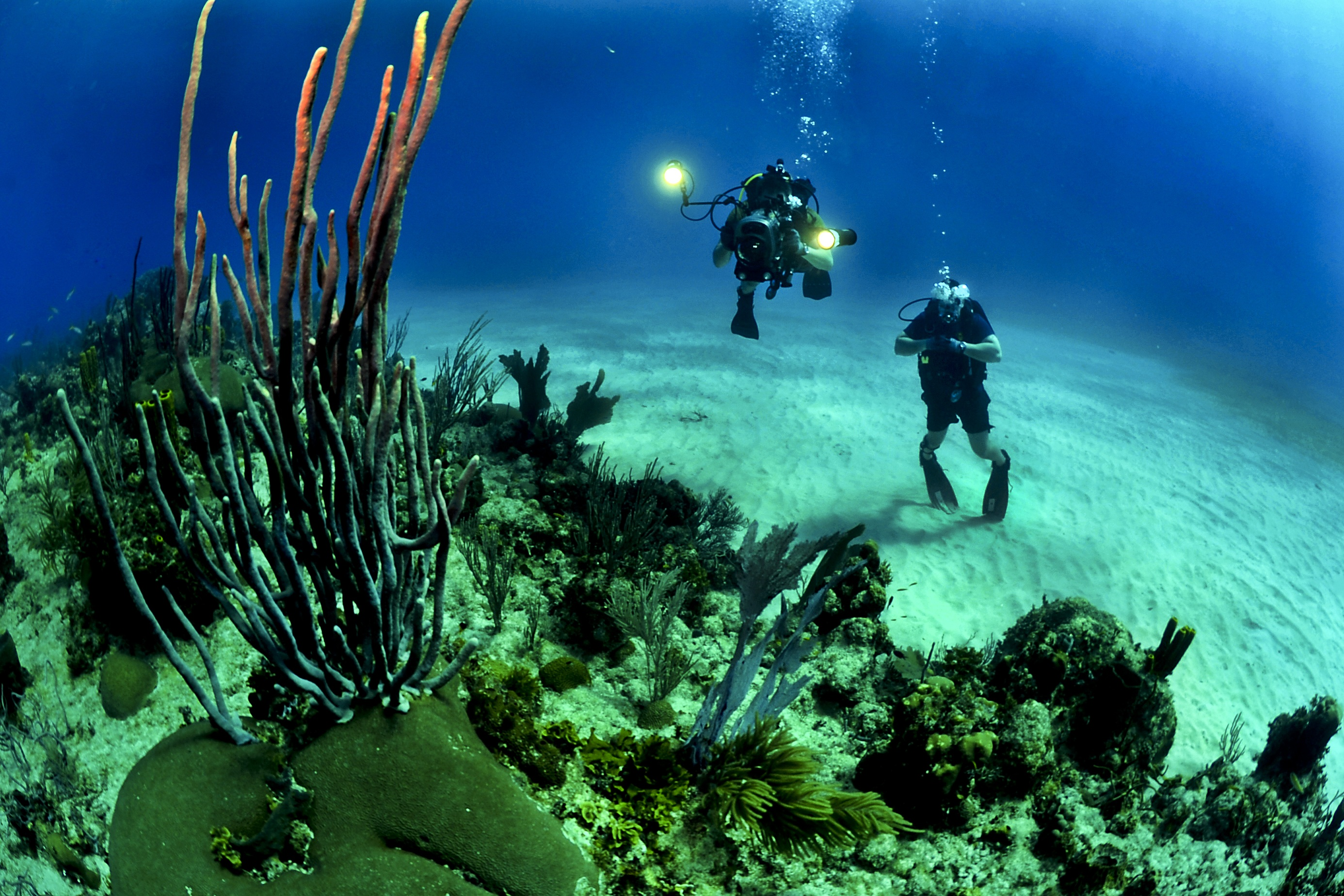 divers around reef