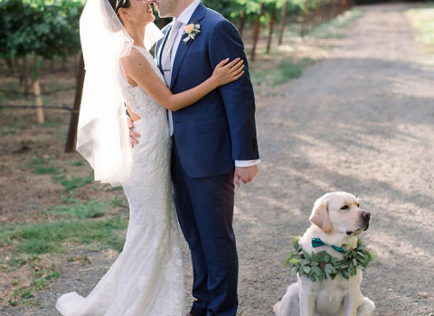 bride and groom in the vineyards with their yellow lab