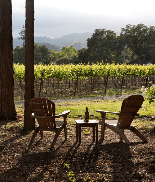hviquad two chairs among tall trees overlooking a vineyard