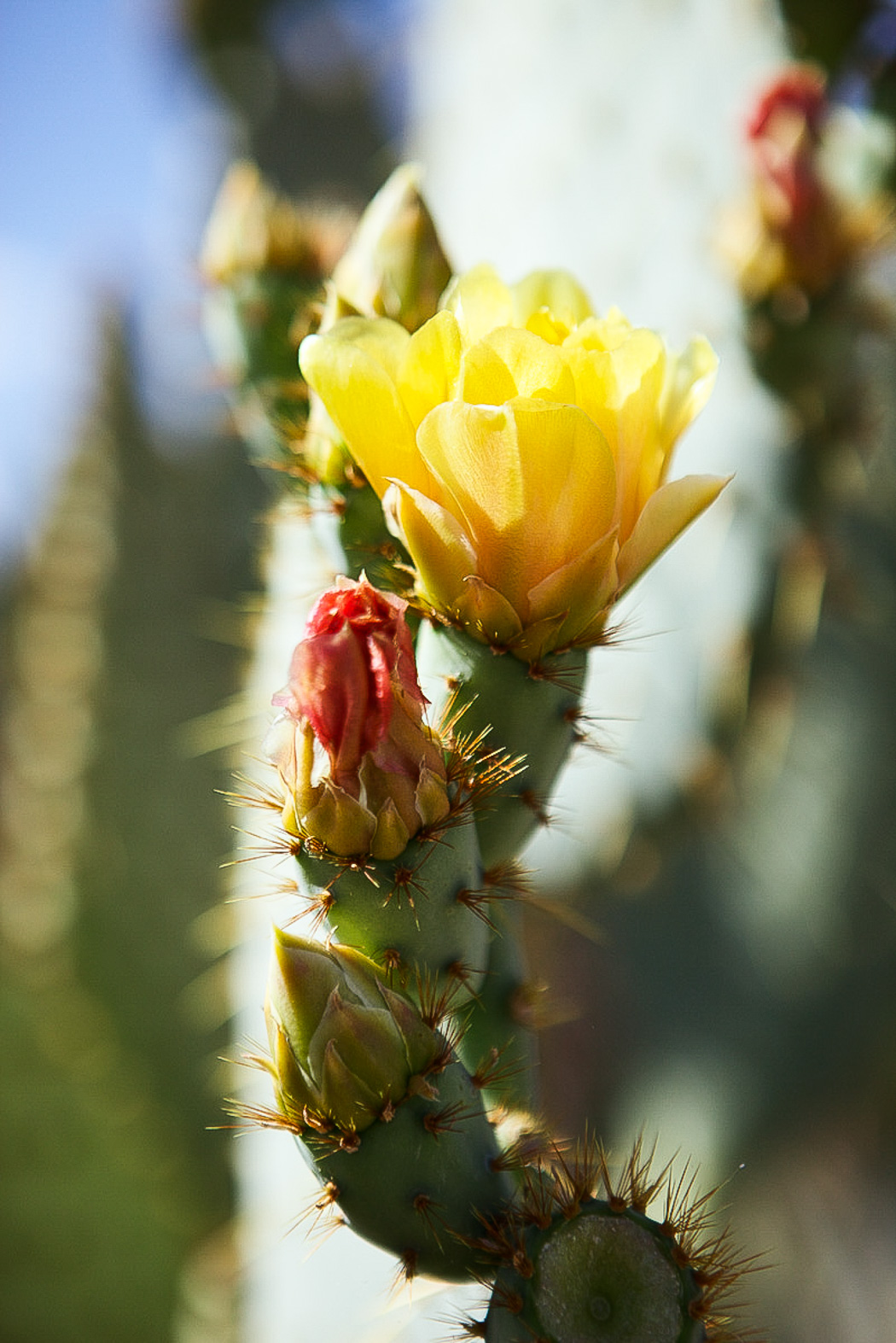 Close up shot of a cactus with flowers