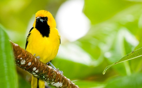 Feathered friends are easily made in Belize