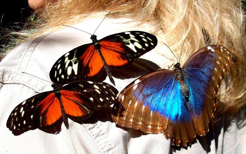 Butterflies are more beautiful in Belize