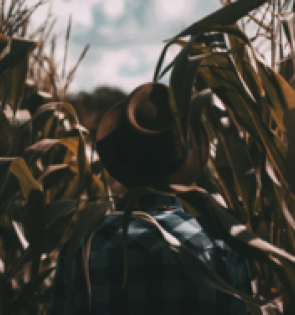 man in hat walking through georgia cornfield
