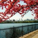 Spring Awakening in New York City