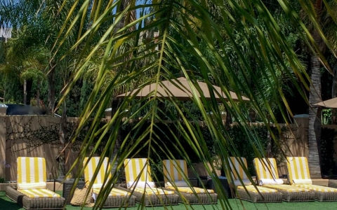 Peak through palm tree leaf of pool & striped loungers