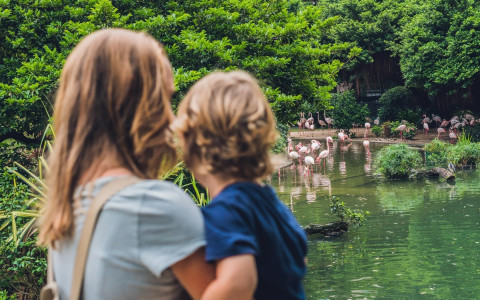 mom and son watching flamingos