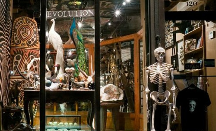 Evolution store front