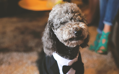 PUPPY LOVE WEDDING BENEFIT FOR ATHENS PETS