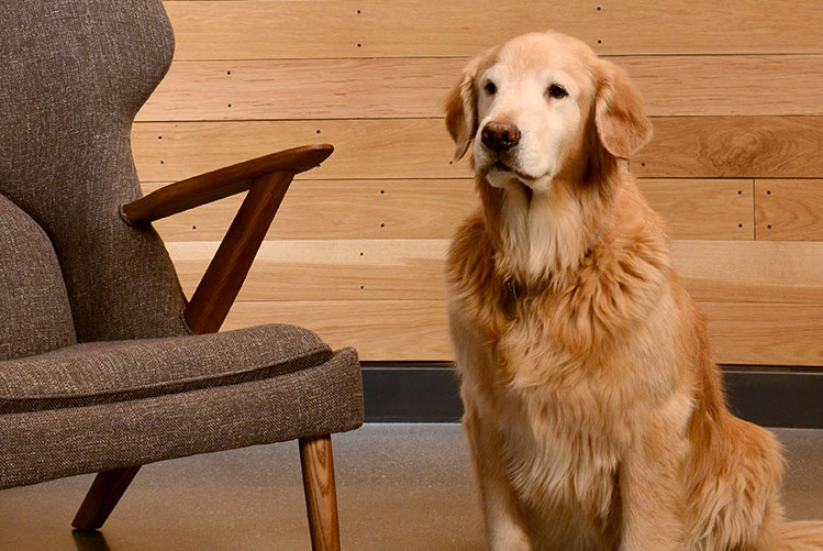 dog sitting next to chair
